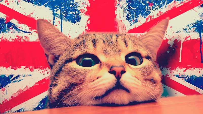6 curiosidades que no todos conocen del inglés