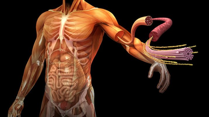 5 datos curiosos sobre la salud humana