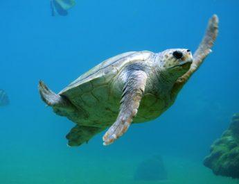 Conoce los animales que pueden extinguirse en menos de 50 años