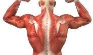 Causas de la hipertrofia