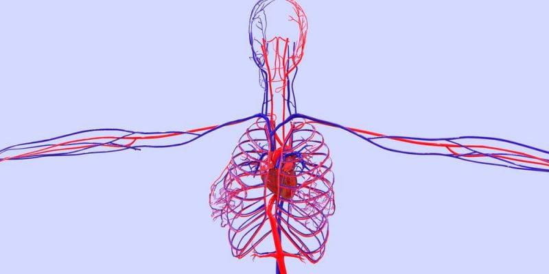 ¿Qué es el sistema circulatorio?